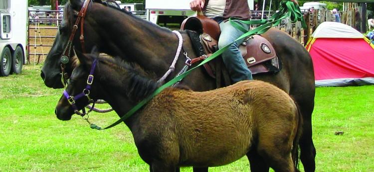 EquestrianPony