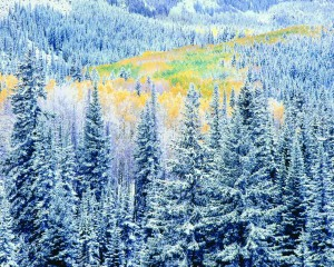 VMP-Art-Burkett-EarlyWinterSnowfallColorado